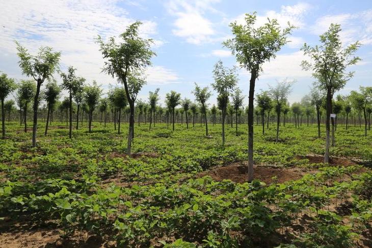 和谐园林贷:助推绿色产业发展及生态环境建设